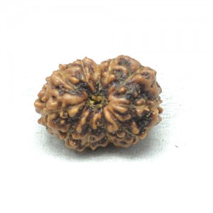 Natural 11 Mukhi Rudraksha Lab Certified