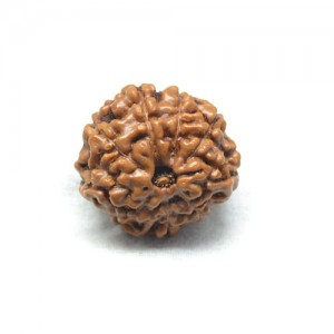 Natural 9 Mukhi Rudraksha Lab Certified